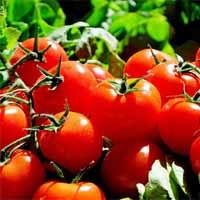 f-tomates